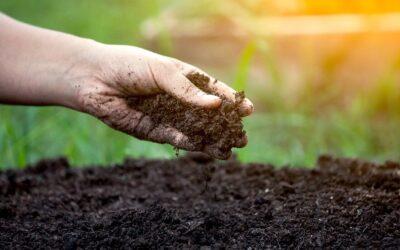 Nouveau produit : Compost Végétal